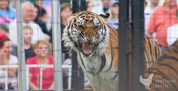 PA Senate Bill 248 Ban Exotic Animals in Traveling Exhibitions